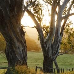 Newenham trees sunlight